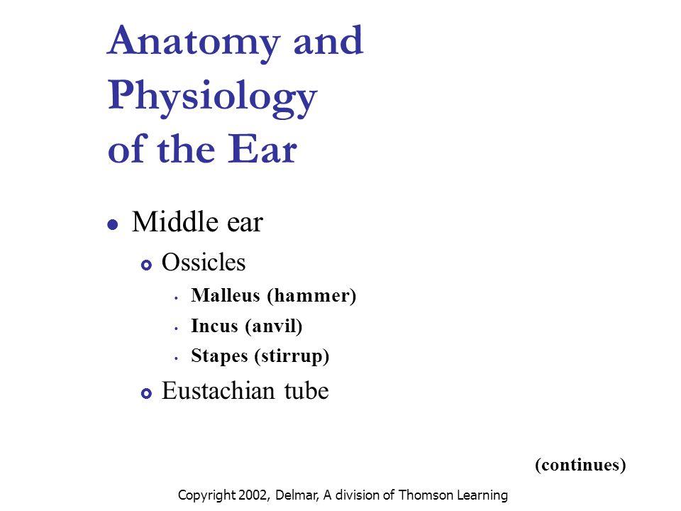 Groß Anatomy And Physiology Of Throat Fotos - Anatomie und ...