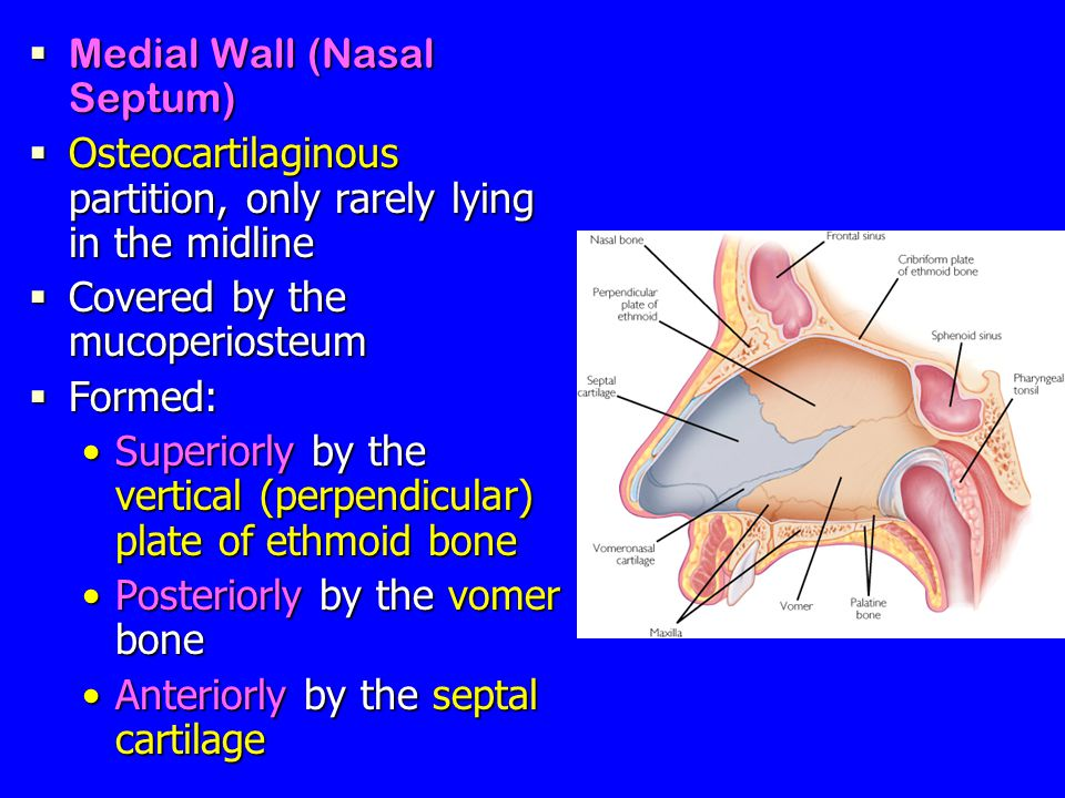 Nose, Nasal cavity & Paranasal Sinuses - ppt video online ...