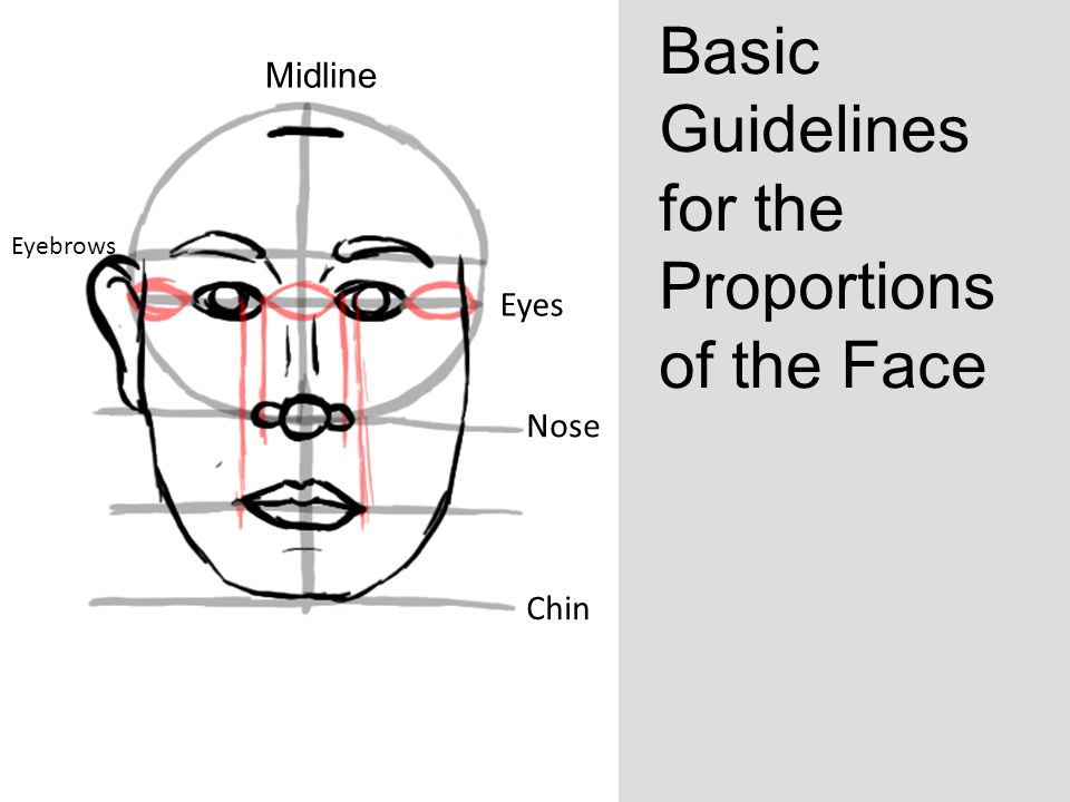 Basic Guidelines for the Proportions of the Face