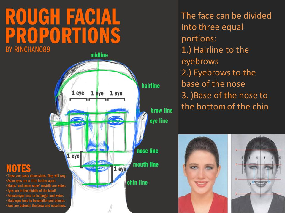 The face can be divided into three equal portions: