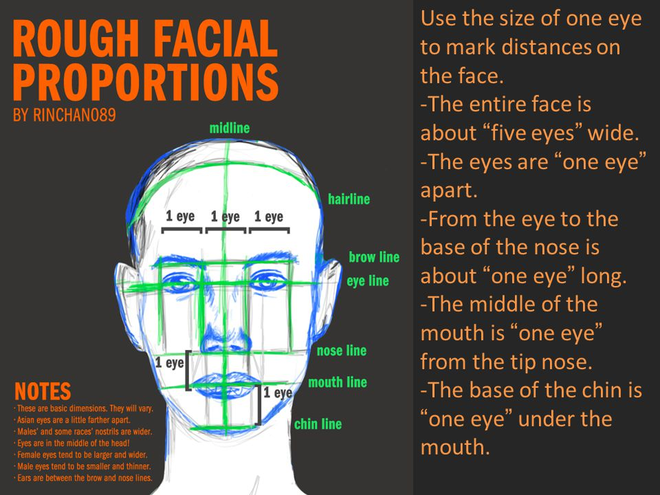 Use the size of one eye to mark distances on the face.