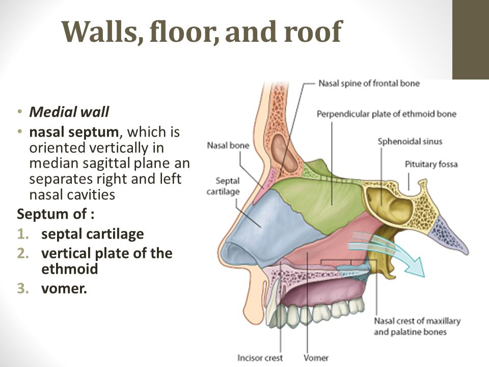 Beautiful Walls, Floor, And Roof Medial Wall