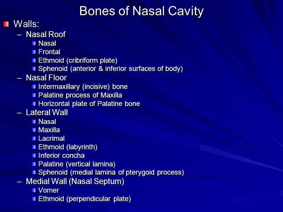 Gross anatomy of the nasal cavity the pharynx ppt for Floor of nasal cavity