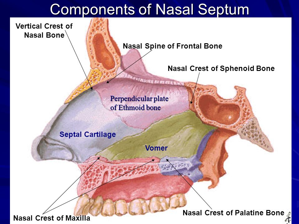 gross anatomy of the nasal cavity & the pharynx - ppt video online, Human Body