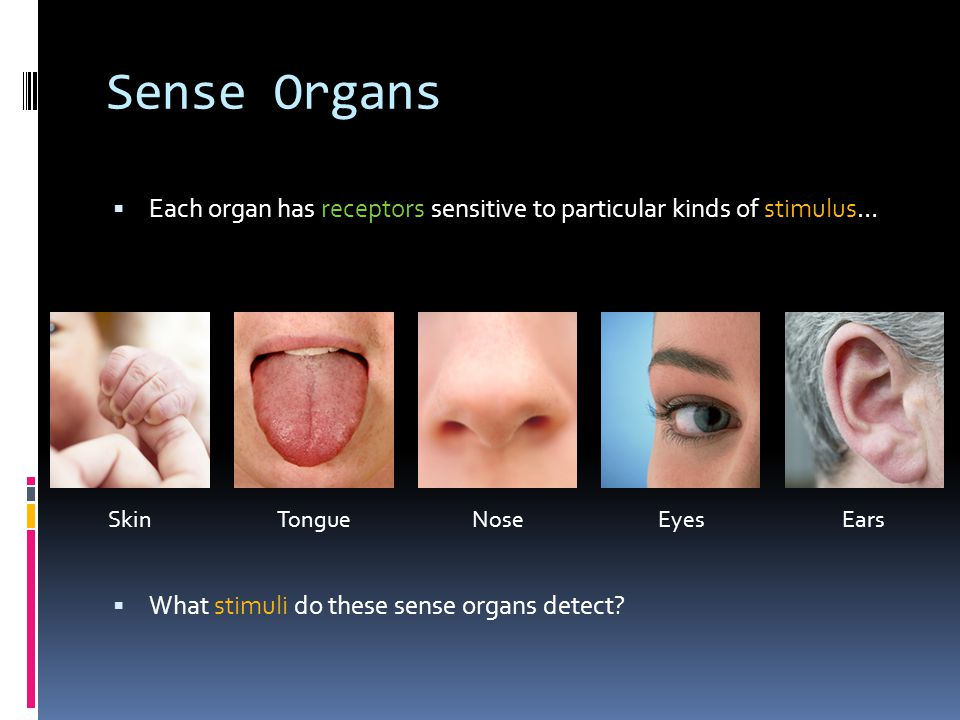 tongue sensitivity and the sense of Looking for online definition of smelling disorders in the  hyperosmia is an increased sensitivity to  bitter, and sour tastes since the tongue senses these .