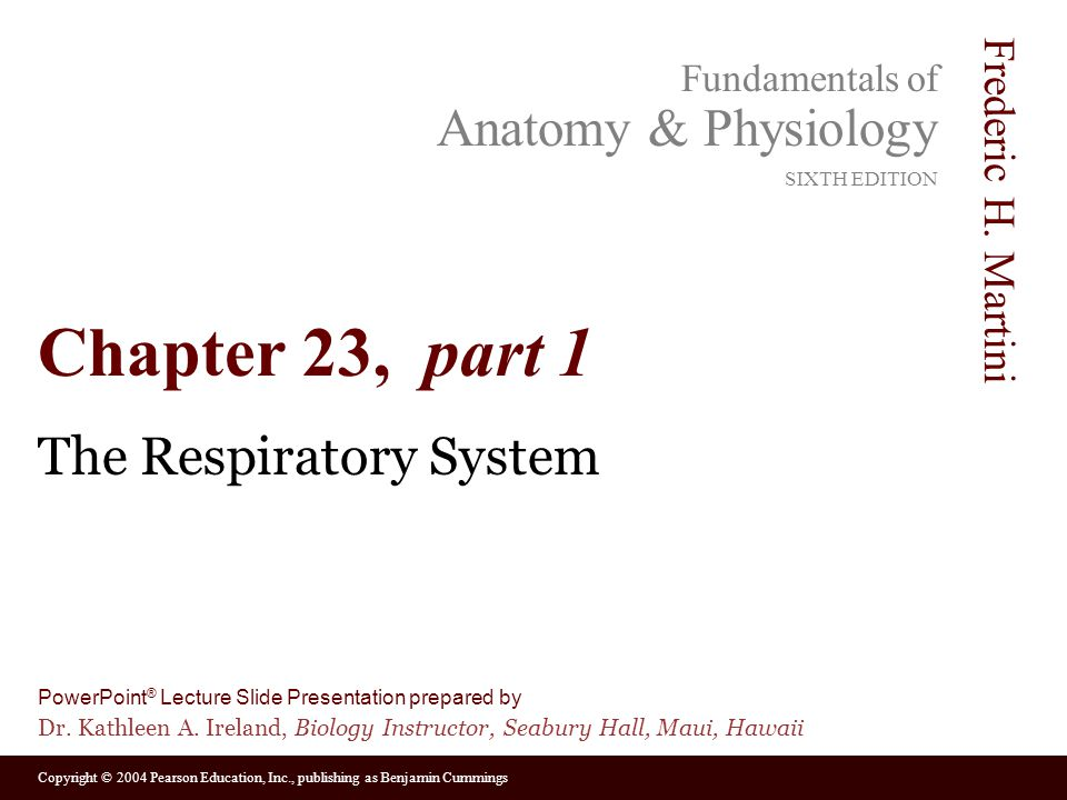 The Respiratory System - ppt video online download