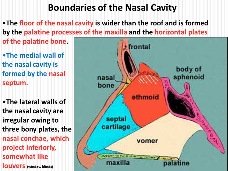 Floor of nasal cavity nasal floor elevation and grafting for Floor of nasal cavity