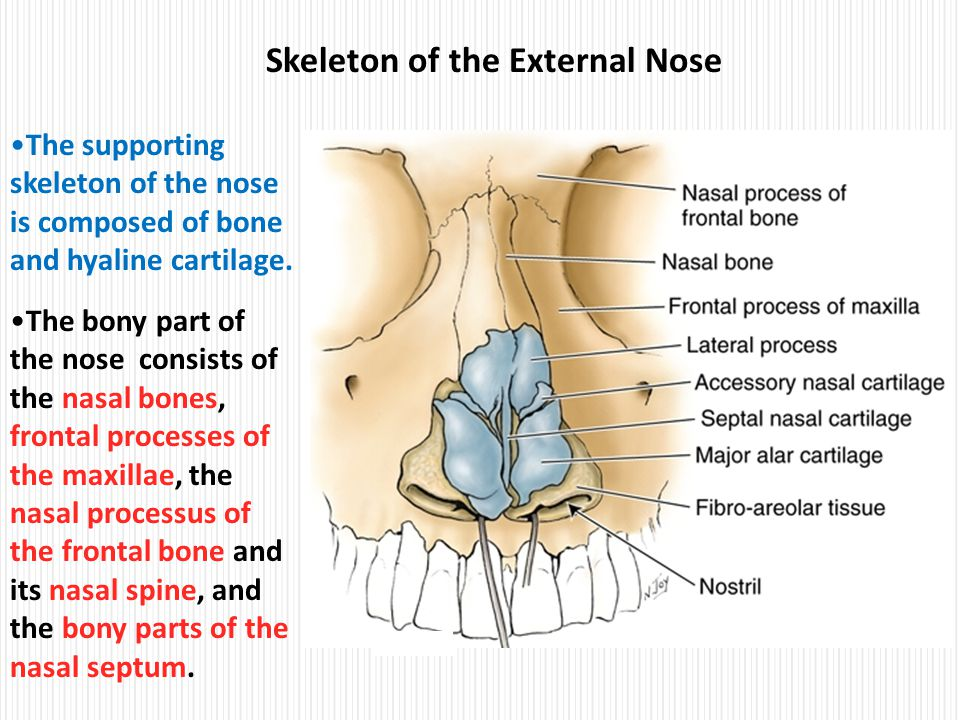 Nose anatomy ppt