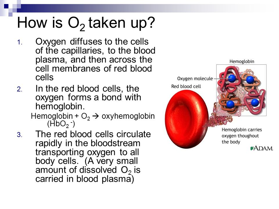 How is O2 taken up Oxygen diffuses to the cells of the capillaries, to the blood plasma, and then across the cell membranes of red blood cells.