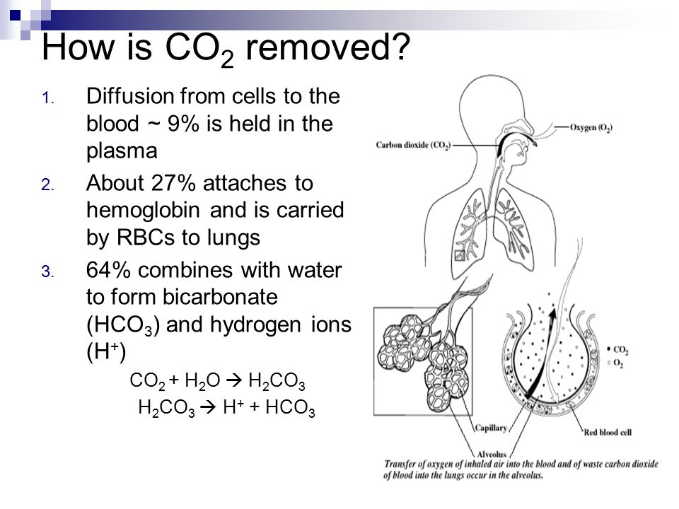 How is CO2 removed Diffusion from cells to the blood ~ 9% is held in the plasma. About 27% attaches to hemoglobin and is carried by RBCs to lungs.