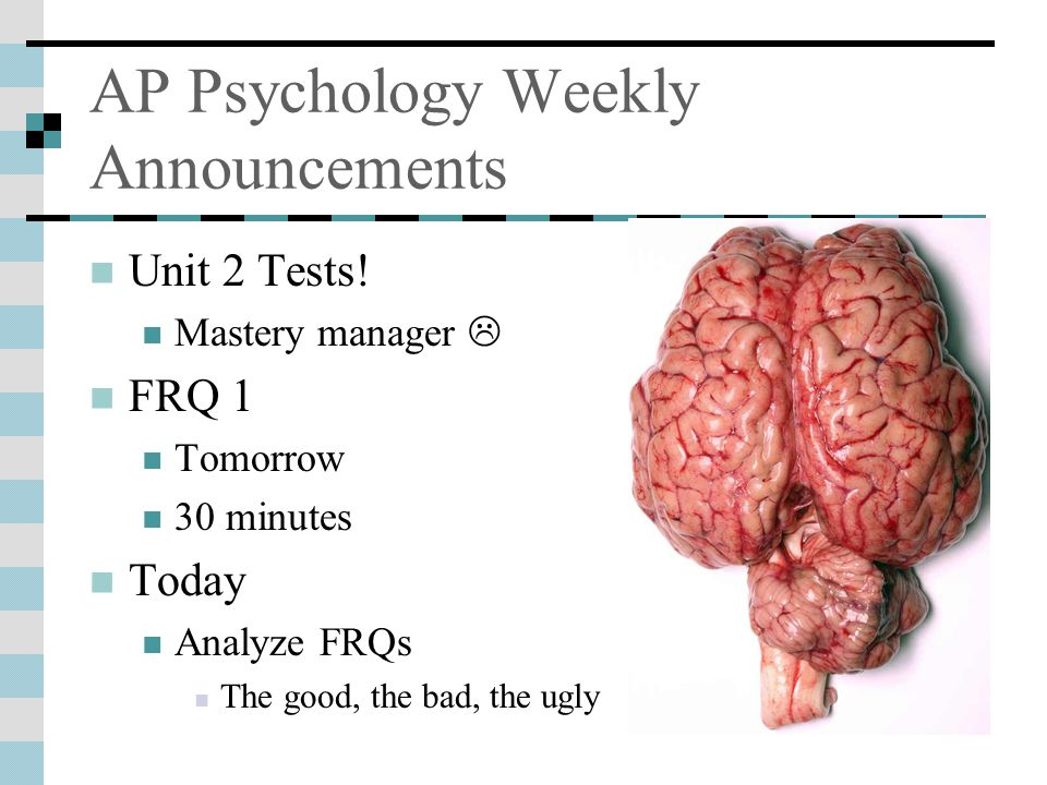 78 AP Psychology Weekly Announcements Anatomy Brain And Cranial Nerves  Quizlet .