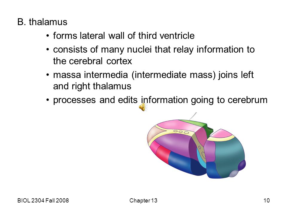 forms lateral wall of third ventricle