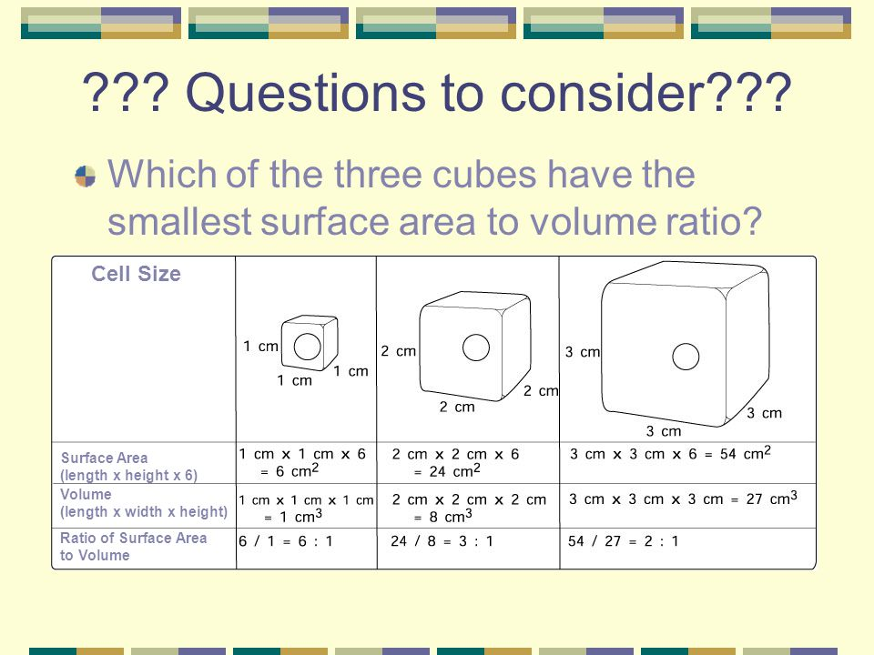 Why are cells so small ppt video online download questions to consider which of the three cubes have the smallest surface area to volume ratio ccuart Images