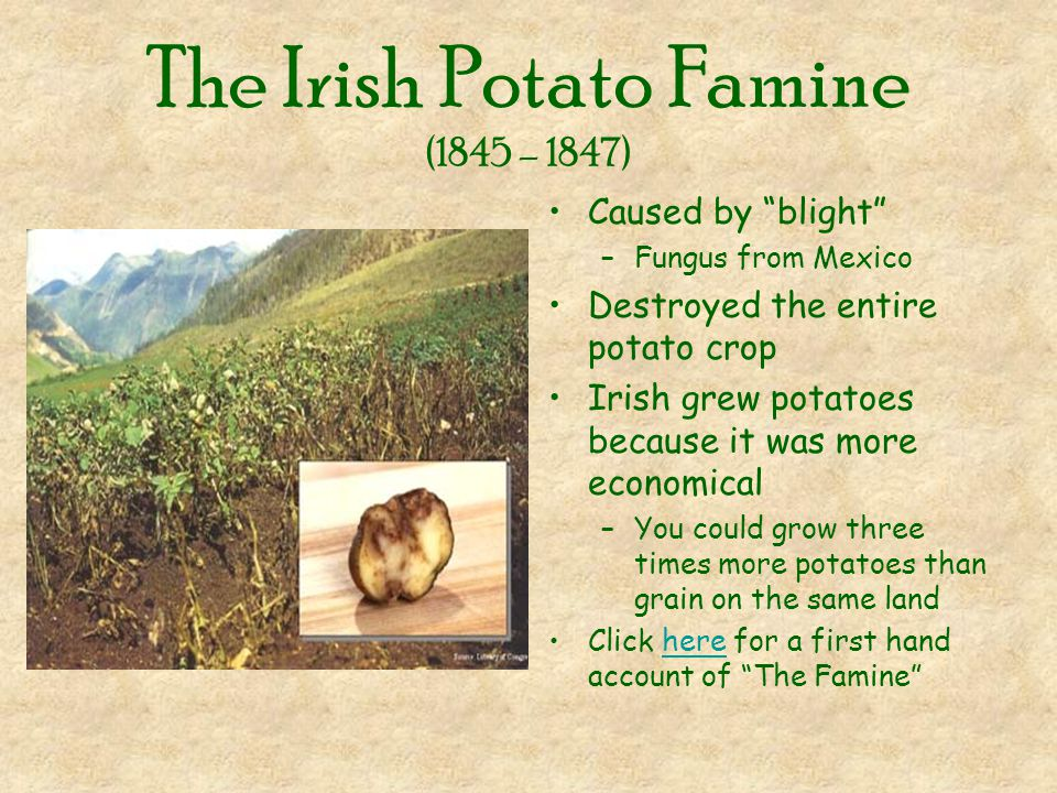 a discussion on the importance of potato for the irish industry Analysis of the key challenges facing potato results and discussion irish potato matures within a short period of time and this enables the farmers.