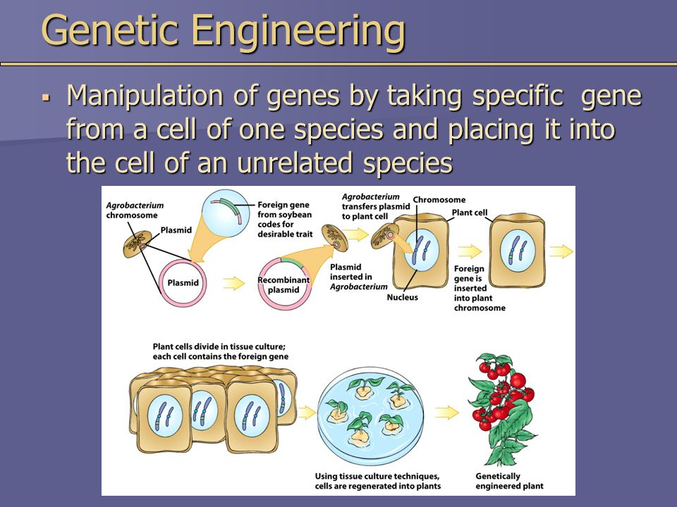 Genetic Engineering Manipulation of genes by taking specific gene from a cell of one species and placing it into the cell of an unrelated species.