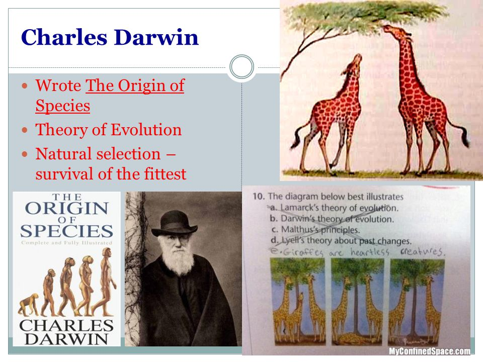 an analysis of charles darwins theory of survival of the fittest The making of the fittest: natural selection and he misapplied darwin's idea of natural selection to charles darwin began to use survival of.