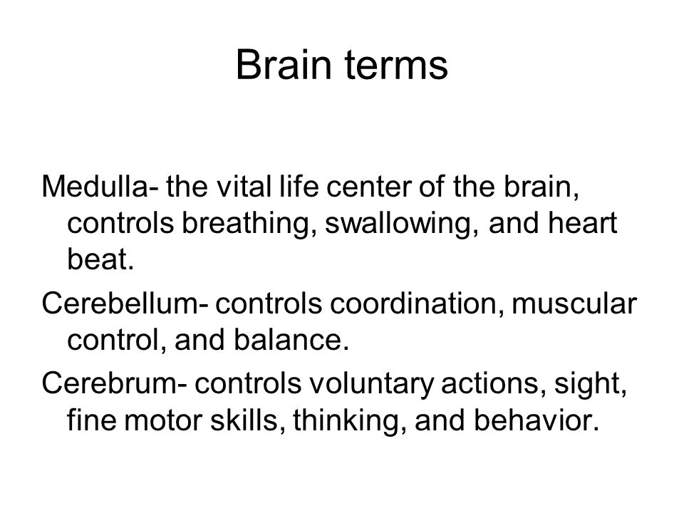 Brain terms Medulla- the vital life center of the brain, controls breathing, swallowing, and heart beat.
