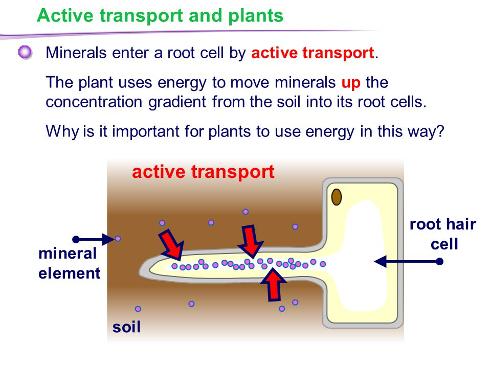 Movement in and out of cells ppt video online download for Soil uses and its importance