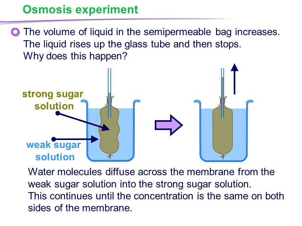 an experiment to understand the process of osmosis and diffusion Diffusion is the process whereby particles of liquids, gases, or solids  a basic  understanding of diffusion and osmosis the purpose of this lab was to have a.