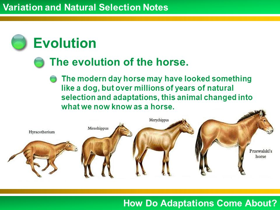 Natural selection evolution study guide