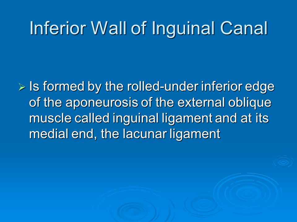 Inferior Wall of Inguinal Canal