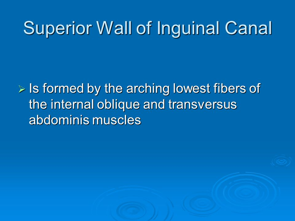 Superior Wall of Inguinal Canal