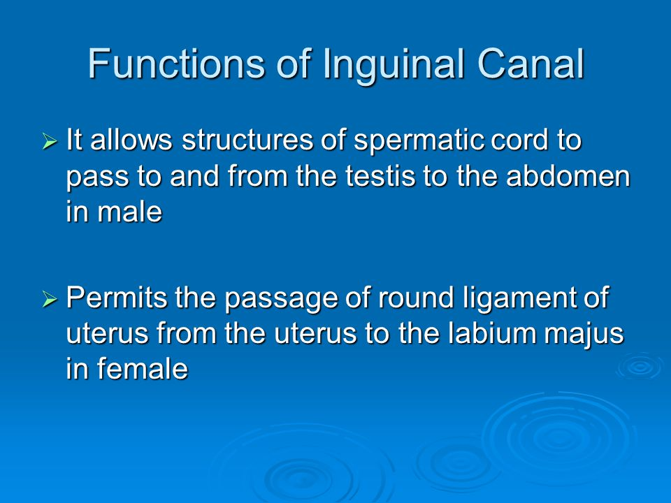 Functions of Inguinal Canal