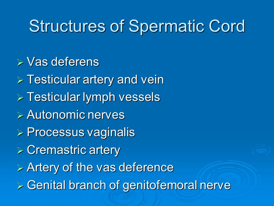 Structures of Spermatic Cord