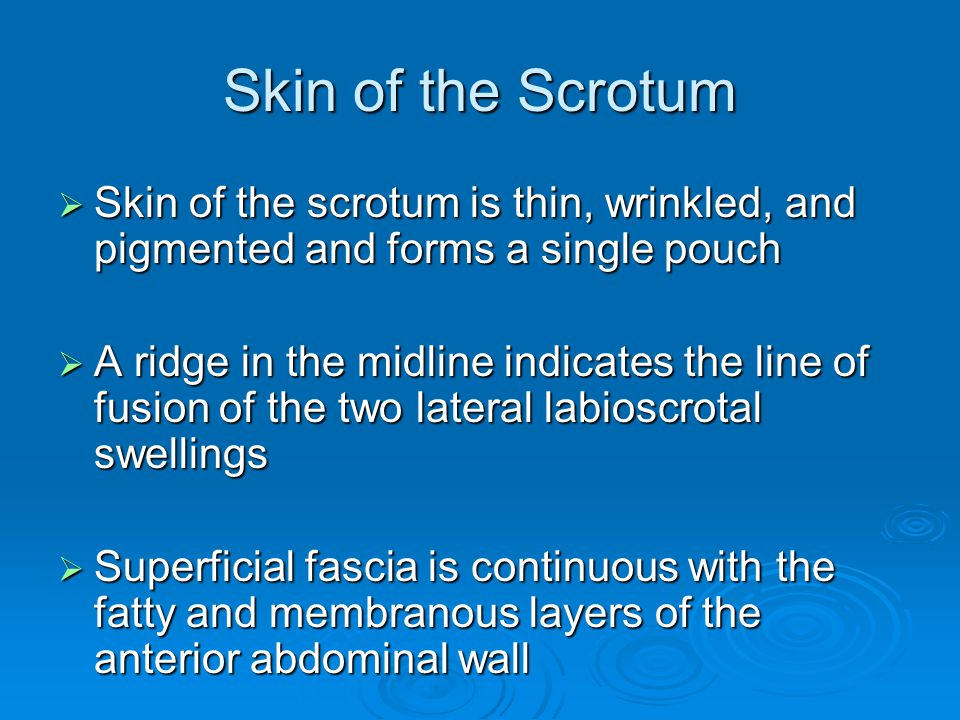 Skin of the Scrotum Skin of the scrotum is thin, wrinkled, and pigmented and forms a single pouch.