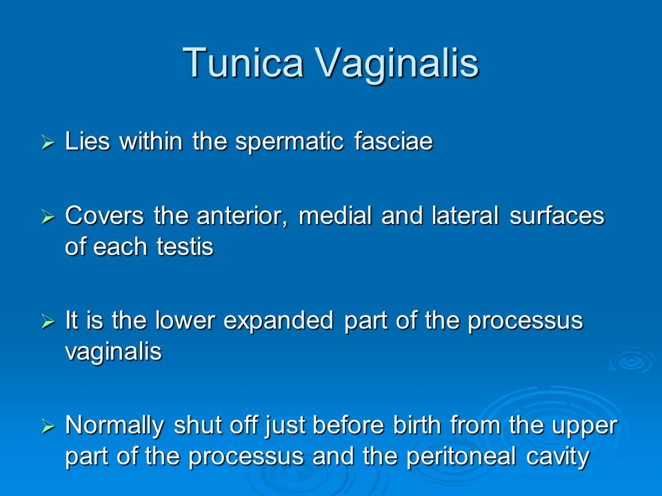 Tunica Vaginalis Lies within the spermatic fasciae