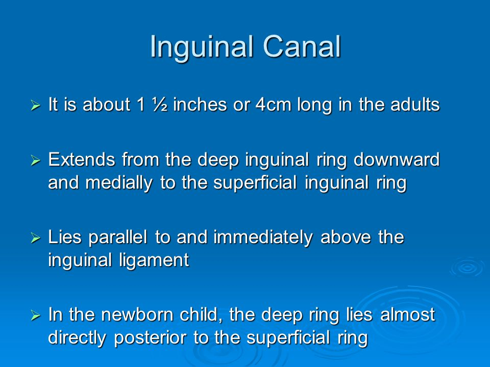Inguinal Canal It is about 1 ½ inches or 4cm long in the adults