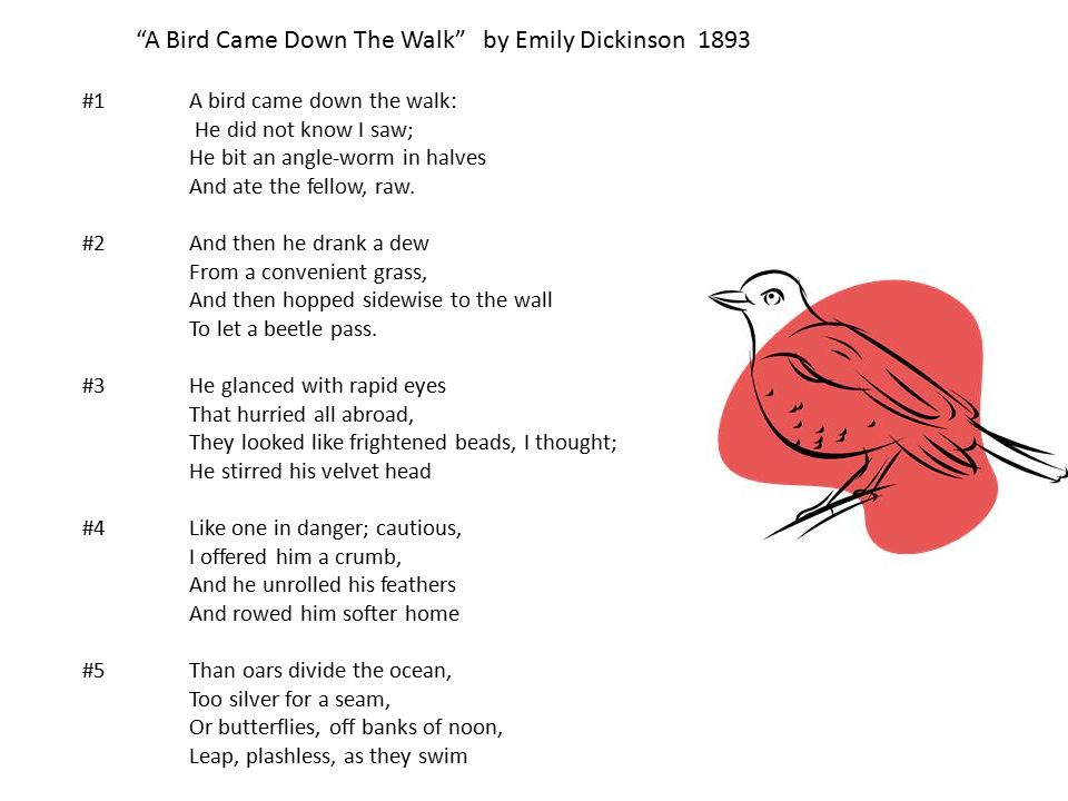 A Bird Came Down The Walk By Emily Dickinson Essay Provides Explication Known Unique Perspective Emotional Learning Analysis  Narrow Eclassical Completely Virtual Record Label Secure Store Open Days  Week