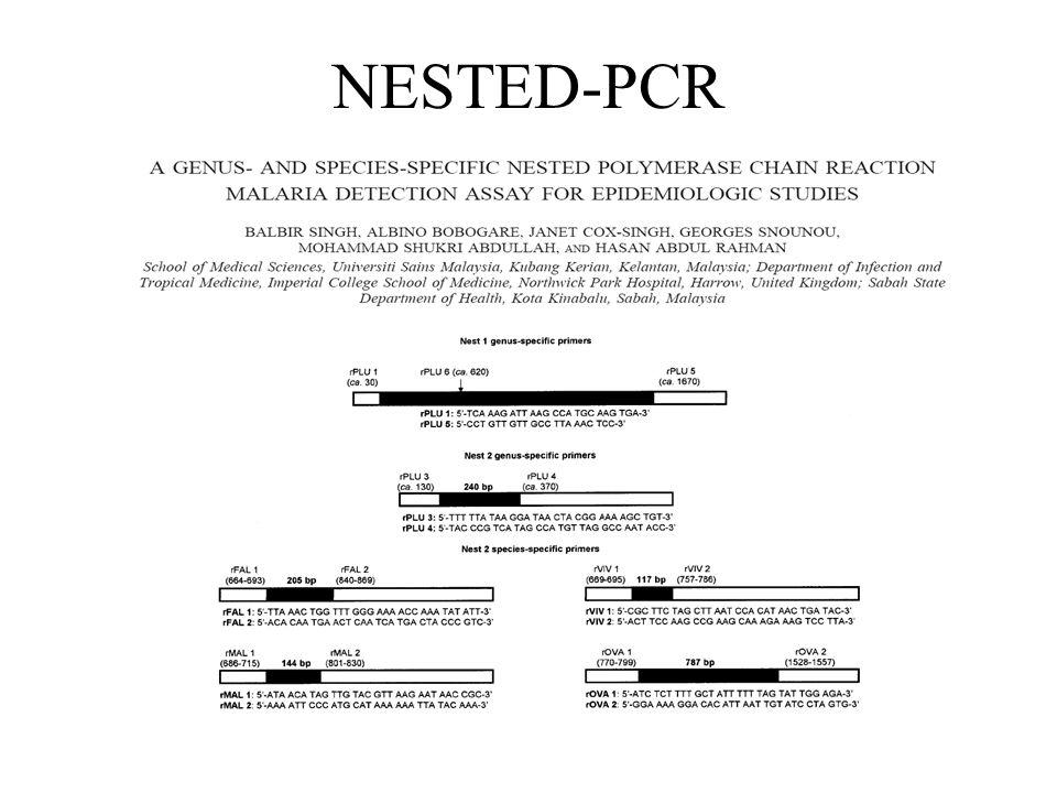 NESTED-PCR
