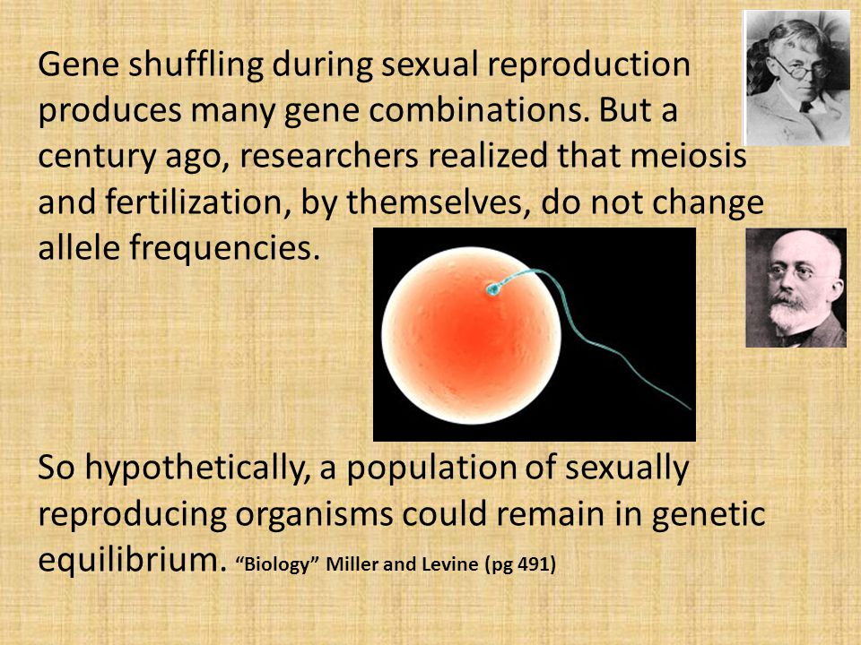 Gene shuffling during sexual reproduction produces many gene combinations. But a century ago, researchers realized that meiosis and fertilization, by themselves, do not change allele frequencies.