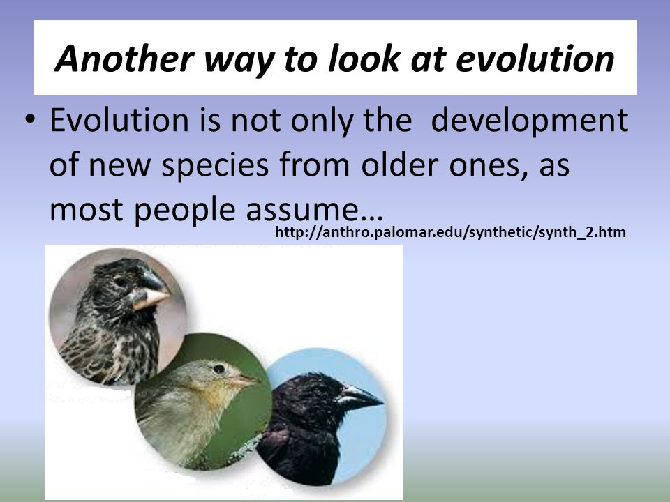 Another way to look at evolution