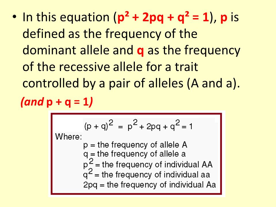 In this equation (p² + 2pq + q² = 1), p is defined as the frequency of the dominant allele and q as the frequency of the recessive allele for a trait controlled by a pair of alleles (A and a).