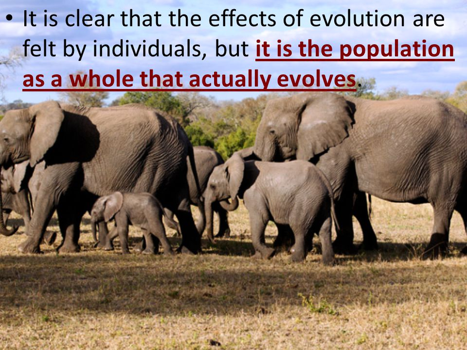 It is clear that the effects of evolution are felt by individuals, but it is the population as a whole that actually evolves.
