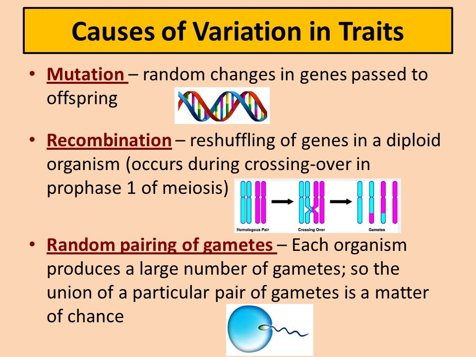 Causes of Variation in Traits