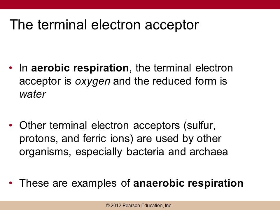 Cellular Respiration Chapter ppt download