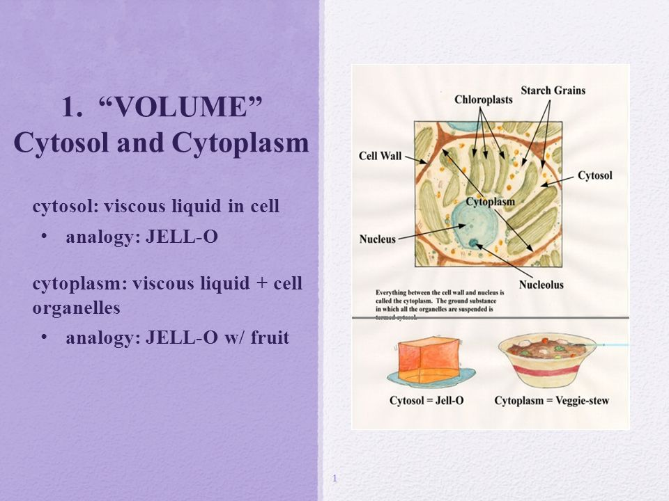 1 Volume Cytosol And Cytoplasm Ppt Download
