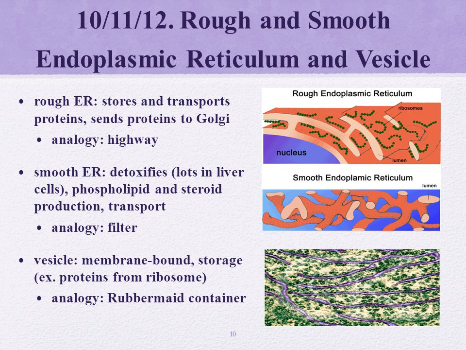 "analogy for smooth er 1. ""VOLUME"" Cytosol and Cytoplasm - ppt download"