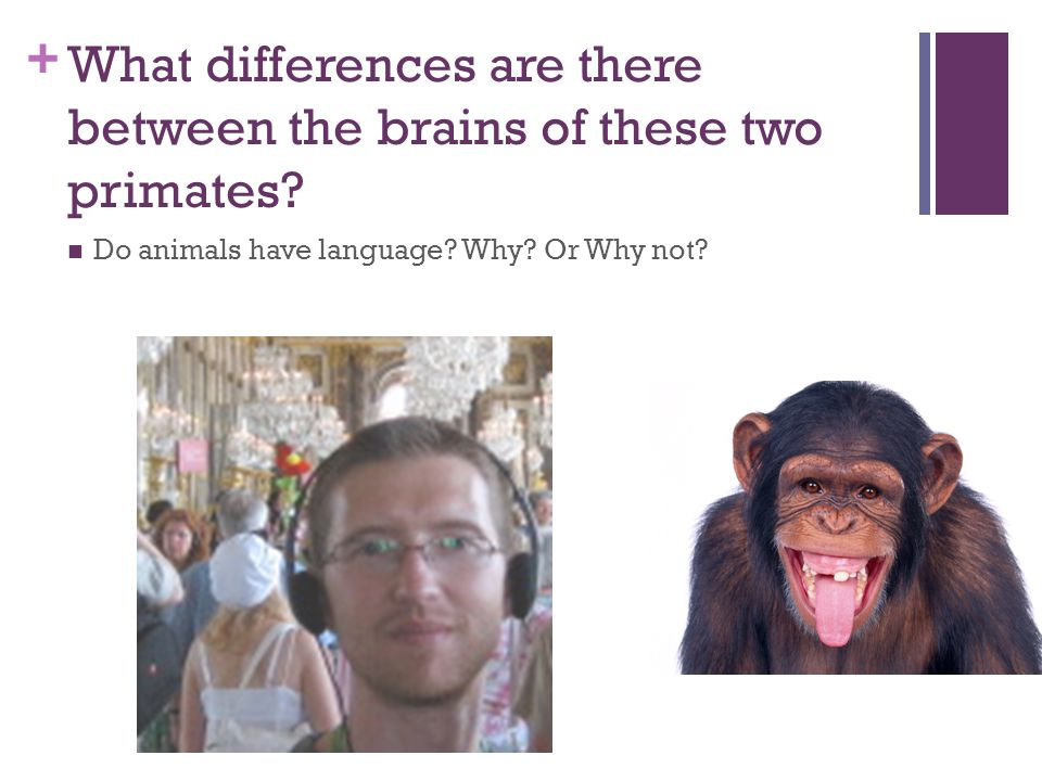 What differences are there between the brains of these two primates