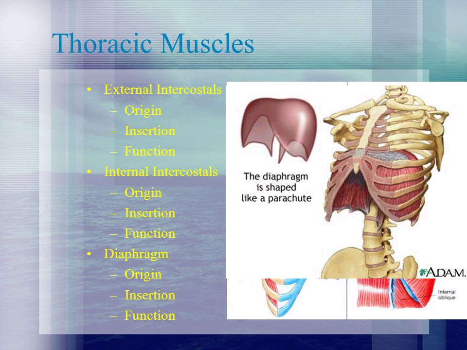Abdomen and Thorax Injuries - ppt video online download