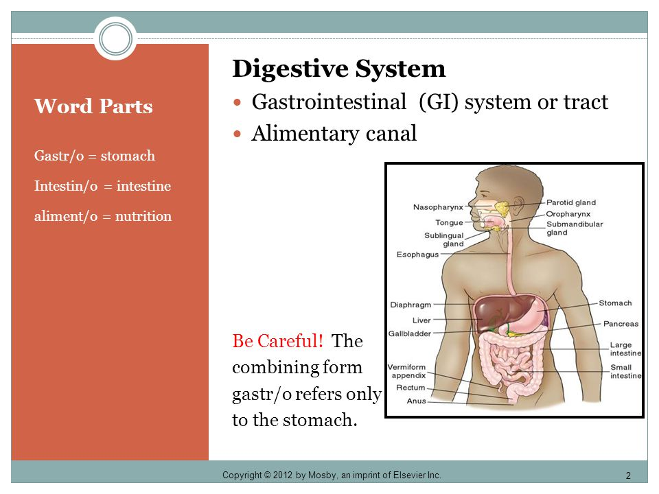 Chapter Five DIGESTIVE SYSTEM. - ppt download