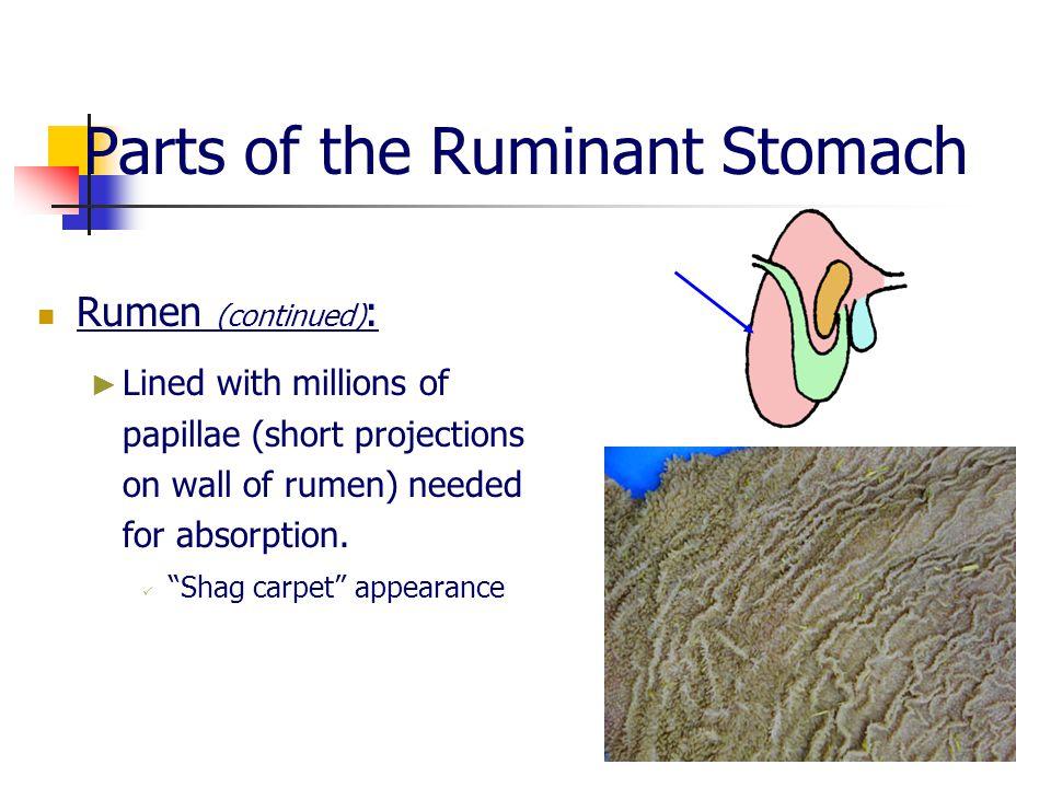 ruminant fluid Ruminal fluid vfa procedure  updated september 2013  i reference: a erwin et al 1961 j dairy sci 44:1768 (for luminal fluid preparation.