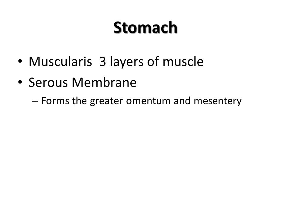 Stomach Muscularis 3 layers of muscle Serous Membrane