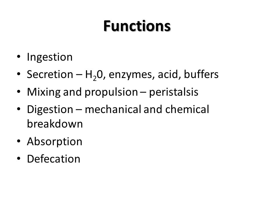 Functions Ingestion Secretion – H20, enzymes, acid, buffers