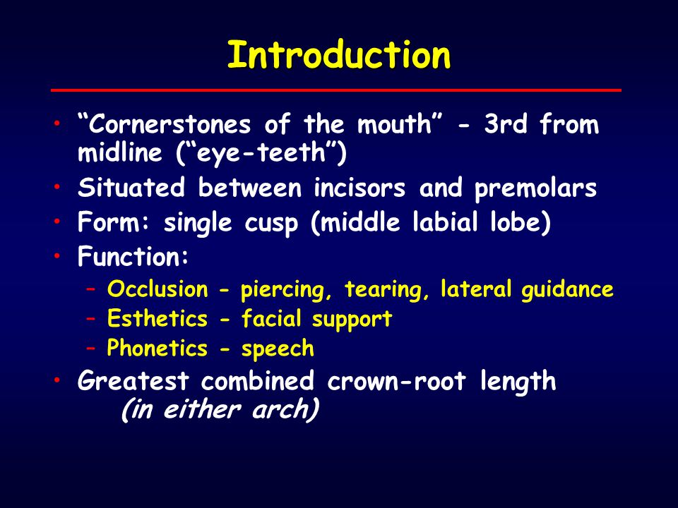 Introduction Cornerstones of the mouth - 3rd from midline ( eye-teeth ) Situated between incisors and premolars.