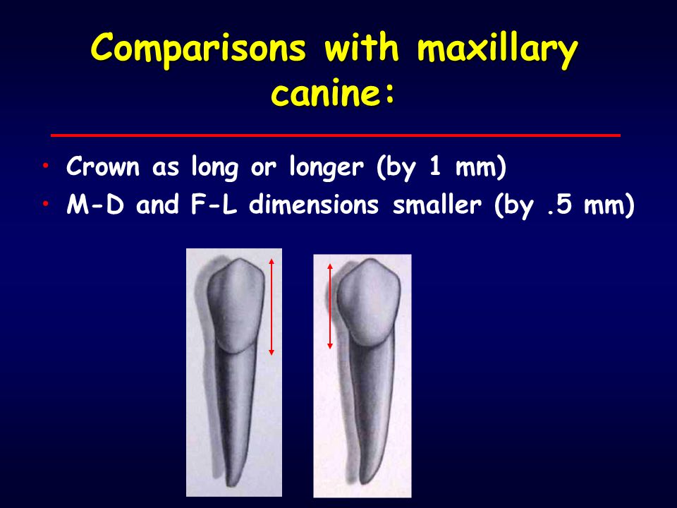 Comparisons with maxillary canine: