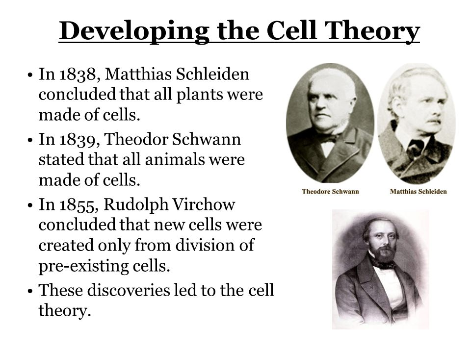 A Tour of the Cell (Chapter 6). - ppt download